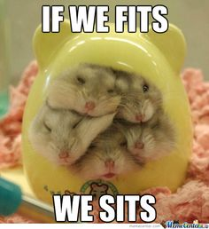 Funny pictures about Hamster house over capacity. Oh, and cool pics about Hamster house over capacity. Also, Hamster house over capacity. Cute Baby Animals, Animals And Pets, Funny Animals, Animal Jokes, Animal Pictures, Cute Pictures, Pictures Images, Bing Images, Beautiful Pictures