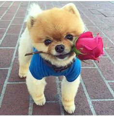 A Single Rose....Gift for You.