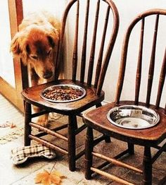 Wow! Let's make it easier for those big old dogs - they too don't like to bend down after a certain age! Pamper your pet with bowl chairs!