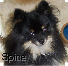 Spice one happy little guy!