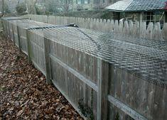 dog proof fence
