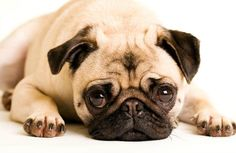 Is Your Dog Depressed? - Pet360 Pet Parenting Simplified