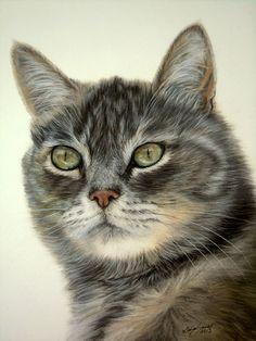 Katzenzeichnungen in Pastellkreide / Cat drawings in soft pastels (24 cm x 32 cm)