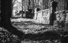 Zeď porostlá břečťanem na hřbitově bláznů