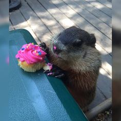 My office has a groundhog who regularly comes by for snacks. Today it was someone's birthday... http://ift.tt/2fiOnjV