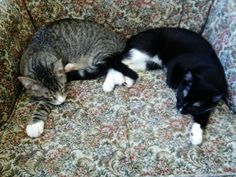 Sweet Dee and Charlie were found by Happy Cats friend and TNR trapper Carmel...
