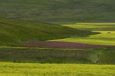 #castelluccio di Norcia #norcia #fioriture #parco #montisibillini #sibillini #pixcube