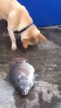 PERRO echa agua sobre peces agonizantes