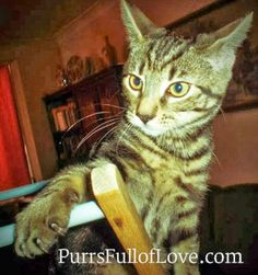 #ThrowbackThursday  #kittens #wildkitty #catblog