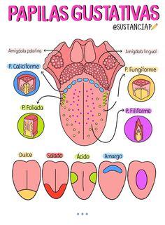Medicine Notes, Medicine Student, Dental Anatomy, Medical Anatomy, Dental Hygiene School, Dental Assistant, Studying Medicine, Science Notes, School Study Tips