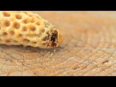 Geburt einer Bienenkönigin - YouTube Queen Bees, Bee Keeping, Honey Bees, Reggio, Montessori, Youtube, Kindergarten, Childhood, Education