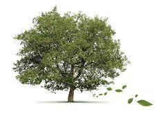 Your family history matters to us | www.fraserandfraser.co.uk | #heirhunters #genealogy #ancestry #familyhistory, #familytree