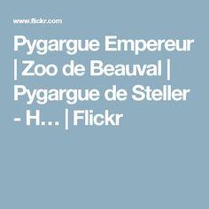 Pygargue Empereur   Zoo de Beauval   Pygargue de Steller - H…   Flickr