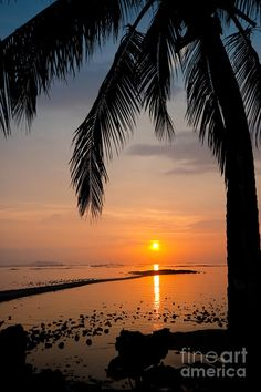 ✯ Palm Tree Silhouette At Sunset