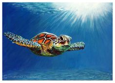 """MUNRO DESIGNS - TURTLE  Acrylic painting of the beautifully colourful sea turtles swimming in a tropical ocean.  """"And the turtles, of course...all the turtles are free, as turtles and, maybe, all creatures should be.""""  Dr. Seuss  ACRYLIC ON CARTRIDGE PAPER 2016"""