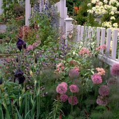 Here are 5 favorite choices of cottage flowers:  Alliums are perfect for early summer flowering  Astrantia is very cottagey & delicate looking  Lupins are ideal for adding brilliant color in early summer  Marguerites seeds freely but always looks fresh and cheerful  Sweet Rocket has an amazing evening fragrance