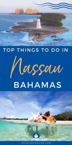 Best Things to Do in Nassau, Bahamas on a Cruise (2021) - If you are visiting the Bahamas this summer, have a look at our list of the Best Things to Do in Nassau, Bahamas on a Cruise (2021). Bahamas Cruise, Nassau Bahamas, Cruise Port, Cruise Travel, Cruise Vacation, Packing List For Cruise, Cruise Tips, Top Cruise Lines, Stuff To Do