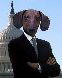 Resultado de imagen para dachshund love