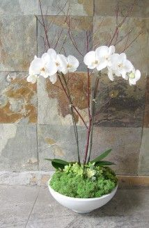 Double Orchid: Double white Phalaenopsis orchid plant in distinct container filled with moss and embellished with viburnum branches. Phalaenopsis Orchid, Orchid Plants, Asian Party Decorations, Orchid Arrangements, White Orchids, Plant Design, Flower Delivery, Rose, Branches