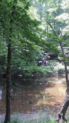 One of the horse trails. Pennypack Park - Philadelphia, Pa.