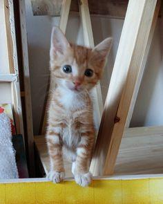 Kitten, Studio, Yellow, Cats, Animals, Instagram, Cute Kittens, Kitty, Gatos