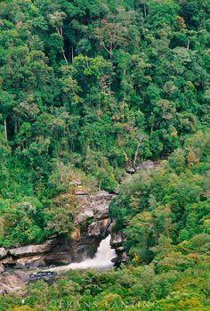 Rainforest and waterfall, Ranomafana National Park, Madagascar ❤ ℒℴvℯly
