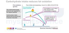 Carbohydrate reduces fat oxidation
