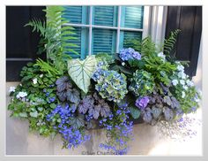 Perfect Shade Plants for Windows Boxes 54 - Alles für den Garten Window Planter Boxes, Outdoor Flowers, Pretty Plants, Plants, Shade Flowers, Planter Boxes, Garden Windows, Shade Plants, Container Gardening