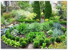Ornamental Vegetable Garden Plants, Ideas, Pictures
