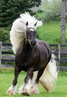 Breathtaking Creature!