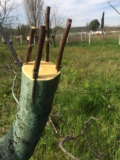 Grafting Fruit Trees, Grafting Plants, Pruning Fruit Trees, Summer House Garden, Plant Fungus, Front Gardens, Diy Playground, Bamboo Crafts, Garden Trees