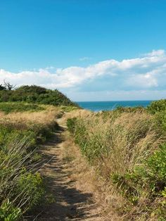 The Nature Conservancy and Block Island Conservancy. Clay Head  block-island.villagesoup.com