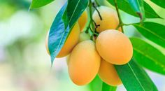 Mangó, trópusi csoda Fruit, Food, Essen, Meals, Yemek, Eten