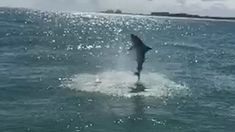 Spinner Shark Jumps Next to Boat in Vero Beach, FL Florida Travel, Florida Keys, Fl Weather, Vero Beach Fl, The Blue Planet, Oceans Of The World, The Weather Channel, Ocean Life, Marine Life