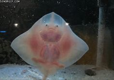 this is I think a type of stingray but I call it  !!!!!!!!!!!!!!!!!!!!!!!!!!!!!!!!!!!!!!!!!!!!!!!!!!!!!!!!!!!!!!!!!!!!