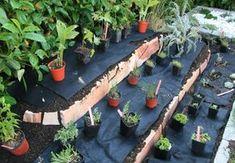 Pflanzen auslegen
