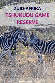 In de buurt van Hoedspruit vind je het private game reserve Tshukudu Game Reserve. Hier heb ik onder begeleiding van een ranger in een open 4x4 een schitterende gamedrive gemaakt. Reis je mee en beleef de momenten mee dat je wild spot. #tshukudugamereserve #wildlife #gamedrive #zuidafrika #jtravel #jtravelblog