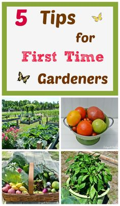 5 Tips for First Time Gardeners Are you thinking about starting a vegetable garden this year? Here are our 5 tips for beginning gardeners based on what we've learned over the years. from Cottage at the Crossroads Garden Yard Ideas, Garden Landscaping, Herb Garden, Lawn And Garden, Organic Gardening, Gardening Tips, Organic Farming, Diy Spring, Starting A Vegetable Garden