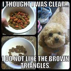 Fussy dog picks through the food