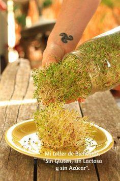 Para hacer crecer germinados.