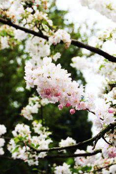 Rue Rodier: Spring Blossom http://www.ruerodier.blogspot.fr/2014/04/spring-blossom.html Photo by Marissa Cox