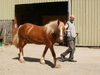 Cwmafon Danny Boy after his first bath, was placed in every class entered in his first local show in-hand at age 2yrs