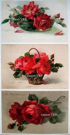 Catherine Klein, Rose Pictures, Flower Photos, Victorian Artwork, Pottery Patterns, Cabbage Roses, Rose Embroidery, Rose Art, China Painting
