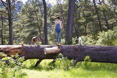 Walking in the Redwoods / Wildlandia