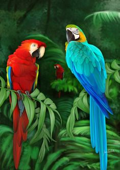 Misiones Digital Painting Fauna By: Iván Pawluk painting media Tropical Art, Tropical Birds, Exotic Birds, Colorful Birds, Cute Birds, Pretty Birds, Beautiful Birds, Animals Beautiful, Parrot Drawing