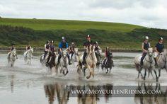 Beach Trek with Moycullen Riding Centre Connemara, Horse Riding, Trekking, Camel, Centre, Horses, Beach, Animals, Animais