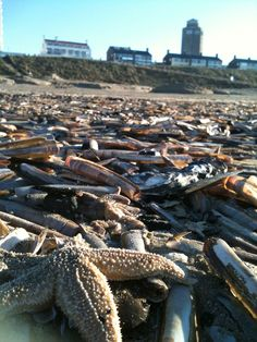 #Zeesterren, #strand, #beach, #Zandvoort