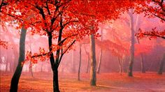 stock-footage-red-maple-leaves-falling-from-the-trees-in-autumn-fall-morning.jpg