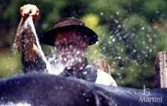 """""""água nos lombos suados, e mais água pras cambonas..."""""""