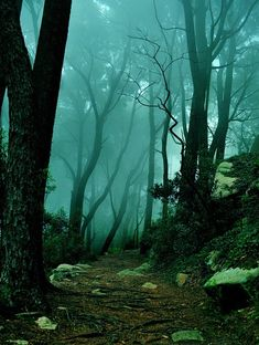 Midnight Garden: In the ~ The Mystic Forest, Sintra, Portugal ~ 11 Mind Blowing Photos of Unreal Places. Beautiful World, Beautiful Places, Beautiful Forest, Lovely Things, Sintra Portugal, Belle Photo, Mists, Paths, Nature Photography